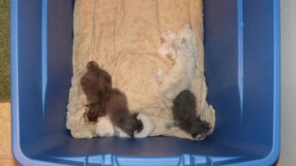 14095575402064 stuart little Poor Kittens! This story would melt your heart