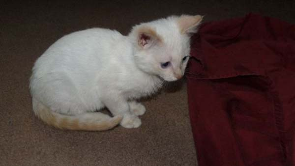 14095575411004 stuart little16 Poor Kittens! This story would melt your heart