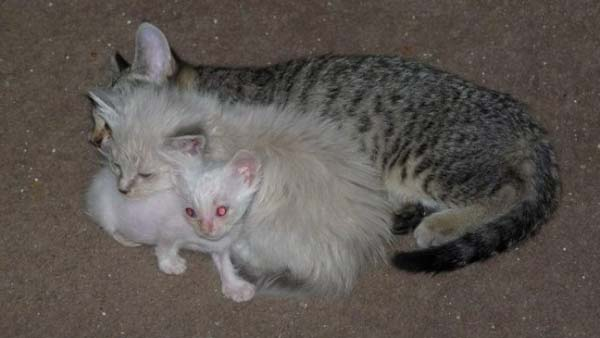 14095575416005 stuart little10 Poor Kittens! This story would melt your heart