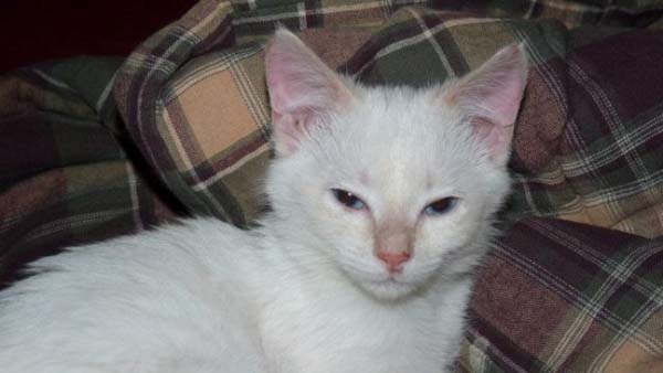 14095575419761 stuart little18 Poor Kittens! This story would melt your heart