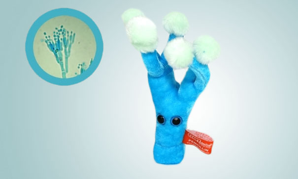 14095575732532 Plush Microbes Penicillin Giant Plush Microbes and Cells