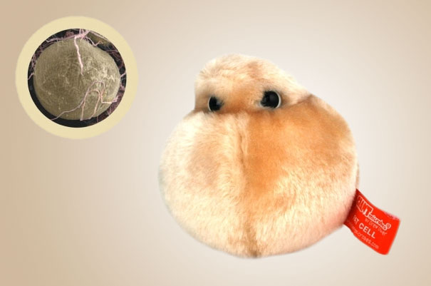 14095575831450 Plush Microbes Fat Cell Giant Plush Microbes and Cells