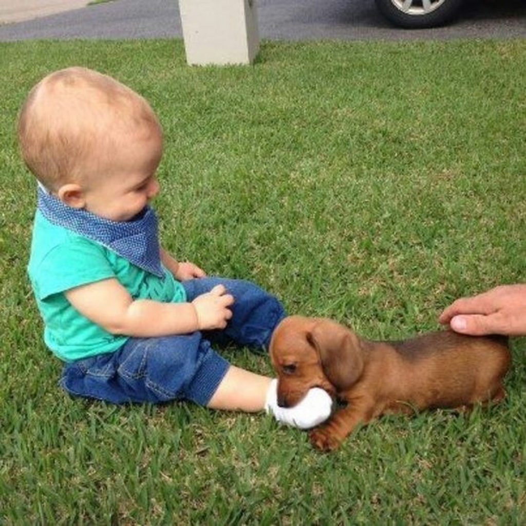 14095579614207 babies meeting dogs 02 Here Are 15 Pictures That Prove Its The Simplest Moments That Mean The Most. Heart = Exploded.