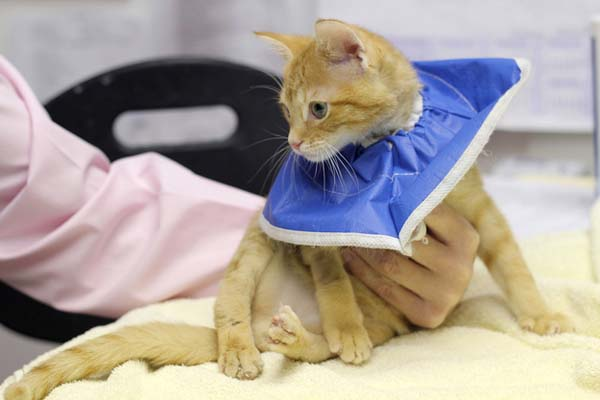 14095584366011 stockings3 Kitten Born With Backward Legs. These Images will Definitely Make You Emotional!