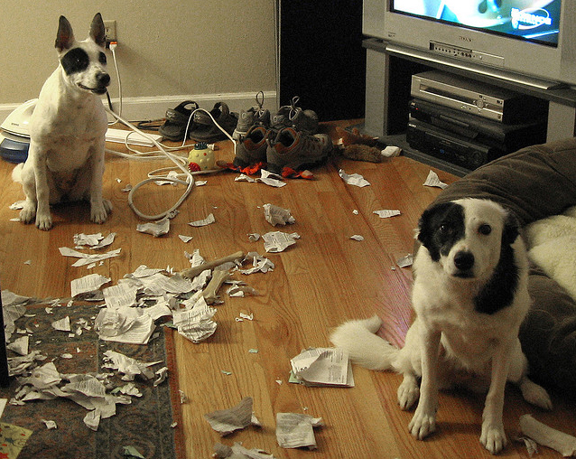 14095616823166 15 Adorable Pictures of Nasty Dogs Creating Mess Around!