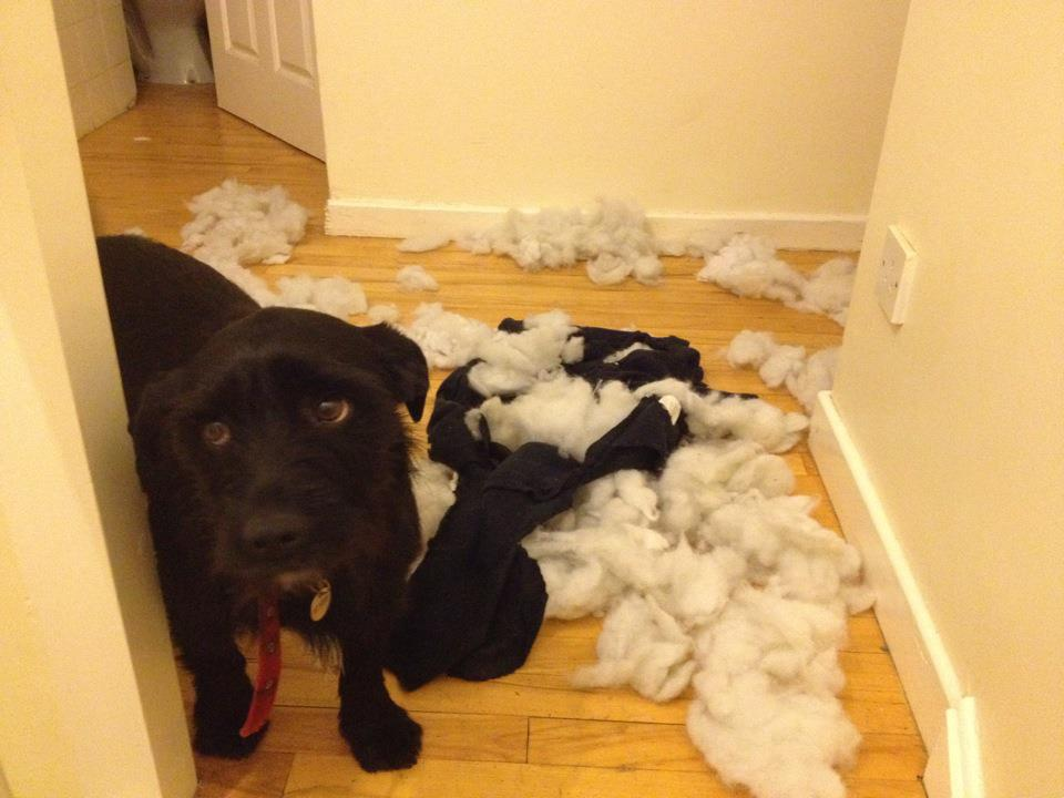 14095616844072 6 stuffing Adorable Pictures of Nasty Dogs Creating Mess Around!