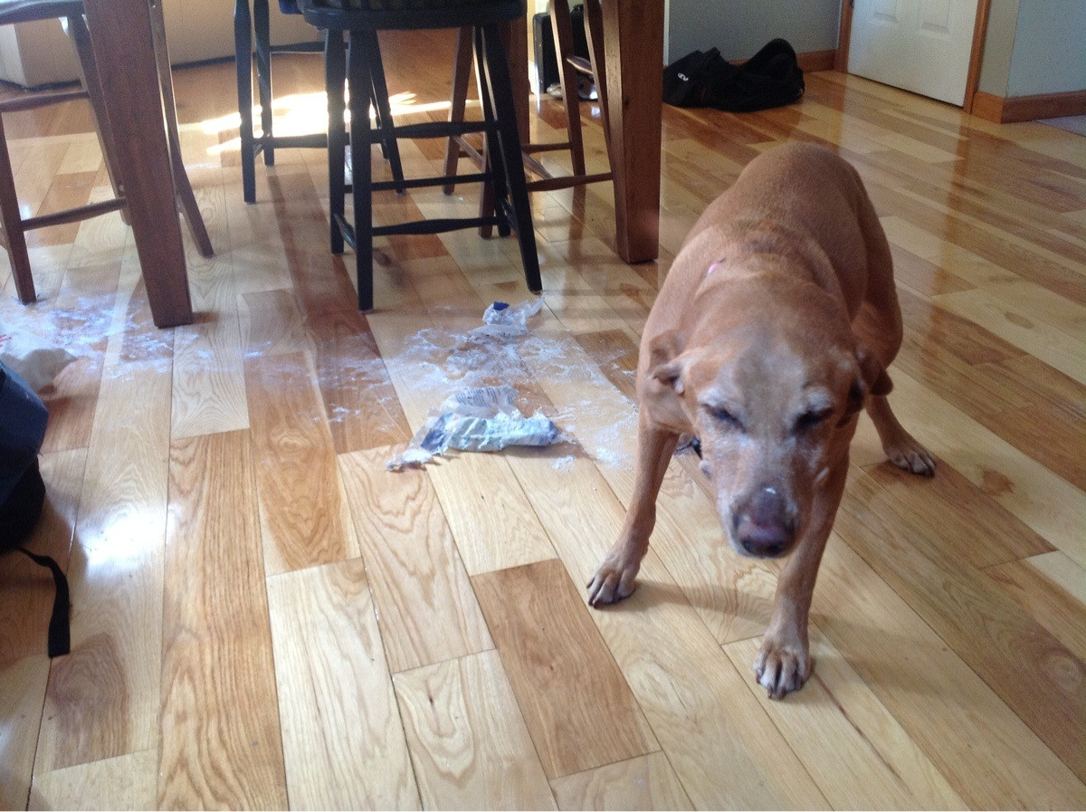 14095616855678 11 flour Adorable Pictures of Nasty Dogs Creating Mess Around!