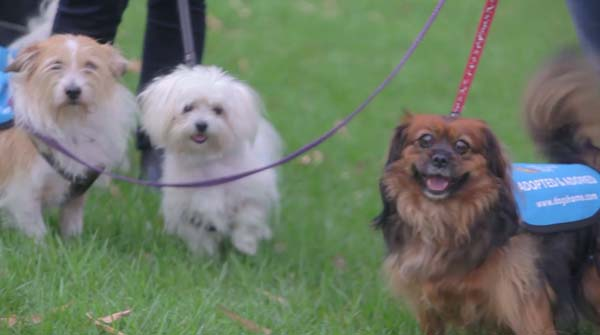 14095617746654 human walking3 Dogs And Humans Could Be Best Pals. See How?