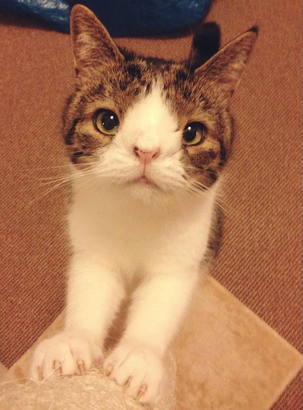 most popular cats monty 2 20 Of The Most Popular Internet Cat Stars