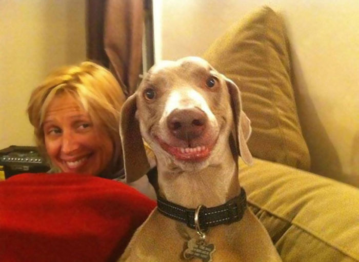 post the happiest dogs who show the best smiles 15  700 Top 20  Happiest Dogs Showing Their Best Smiles
